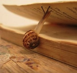 a_snail__and_the_book__via_sine-qua-non